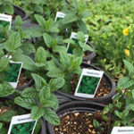 Get a head start on your garden with herbs and vegetable packs.